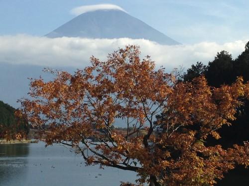 富士国民休暇村に泊まると窓をあけたら、この風景。