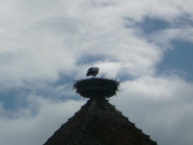 屋根のてっぺんにコウノトリ発見。アルザス、カイゼスベルグ。