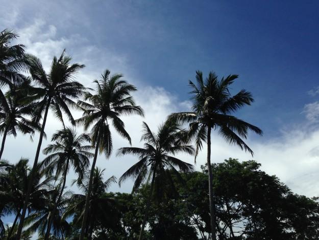[期間限定] バリ島西部(ヌガラ)兄貴邸で異文化交流生募集中です!