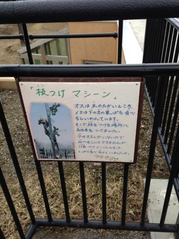 キリンの獣舎には人口の木。それにはわけがある。旭山動物園