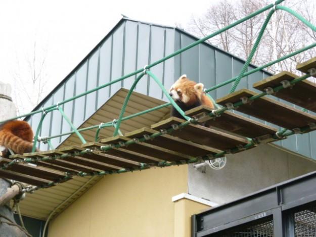 旭山動物園のすごい行動展示 。真冬の動物園を見てほしい。