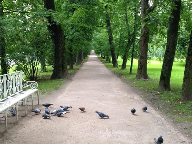 数キロ続くエカテリーナ女王も歩いた散歩道。まっすぐ。