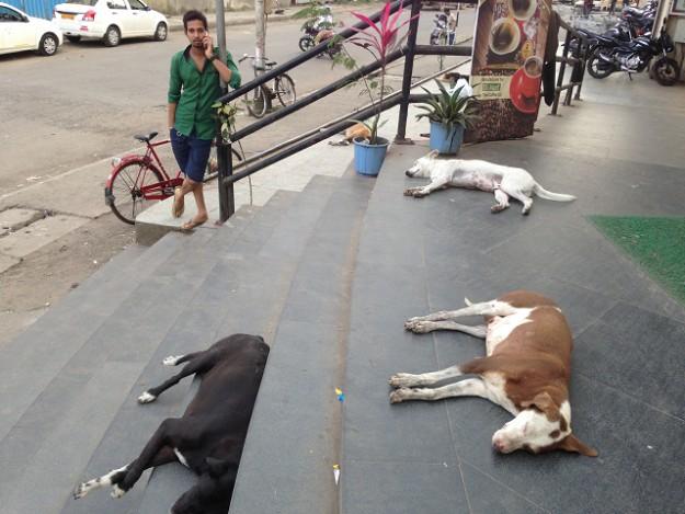 野良犬たちもインド時間でお昼寝