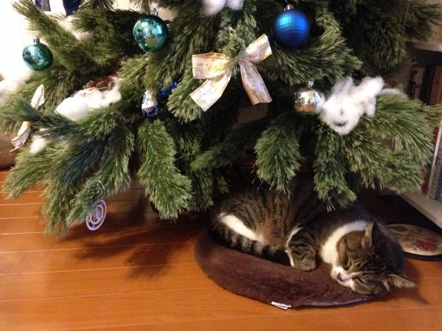 クリスマスツリーと特別なネコ