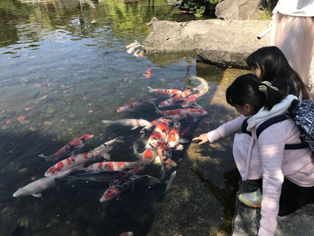 わたしたち、もう大きいからね、鯉のエサくれなかったのよ、と子供たち。