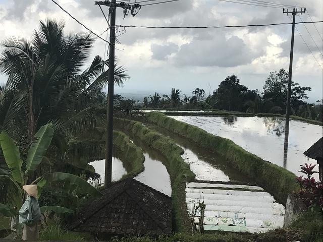 傾斜地にこんなに水がたたえられている。スバック灌漑施設。バリ島