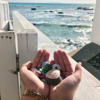 秋谷の海岸で拾った貝殻たち。打ち上げられた、海からの贈り物。