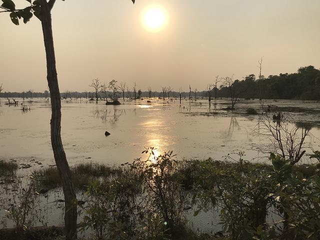 夕刻。太陽が傾いていくと、水面も美しく輝いて、沼に生えた木々が、またとても幻想的。
