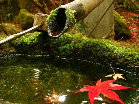 京都の紅葉の時期ももうすぐです!