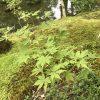 苔寺(西芳寺)で写経体験の京都の午後!応募してみよう!