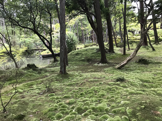庭園内、いろいろな色の苔が生息している。芸術的です。