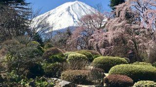 河口湖畔の富士ビューホテルで、富士山と桜の、とっておきの朝食を!