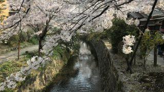 銀閣寺から哲学の道を歩いて平安神宮へ。京都のベストお花見ルートはこれ!