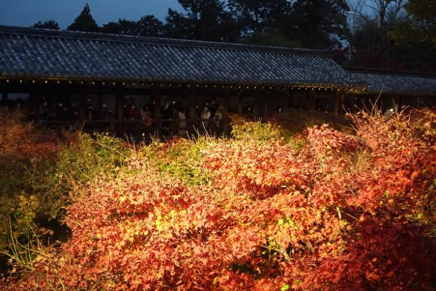 東福寺の境内から通天橋を望みます。もう、まっか赤。